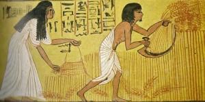 antica grecia _images_stories_vita-quotidiana_tomba-di-Sennedjen-deir-el-medina-aratura